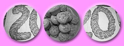 Hefe-20, Muffins (vermutlich rosa)